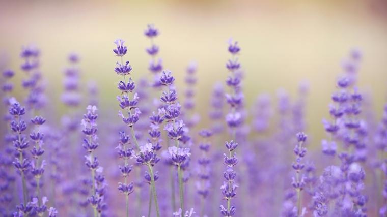 flores-de-cerca