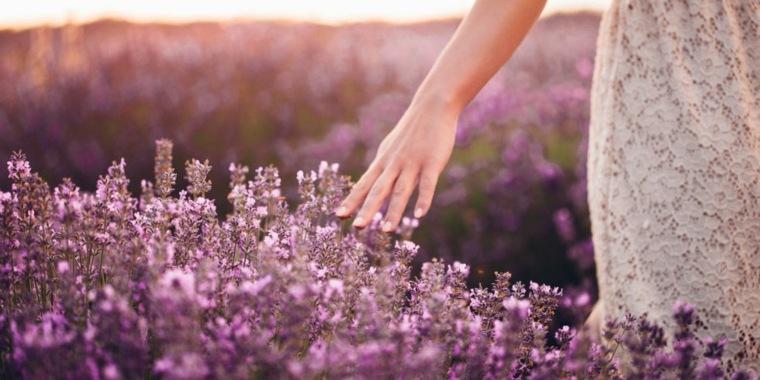 flores-hermosas-de-lavanda