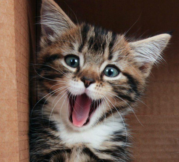 gatito felíz