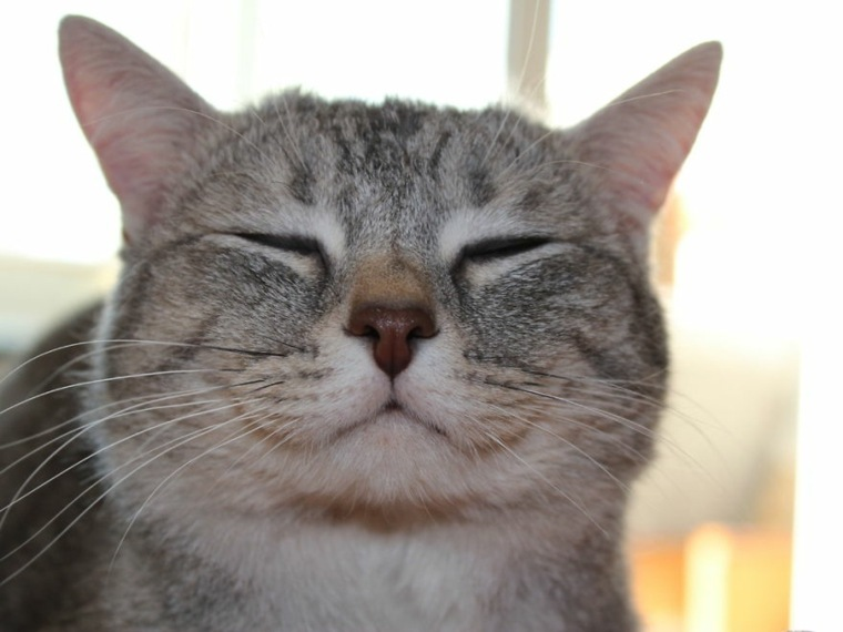 gato felíz