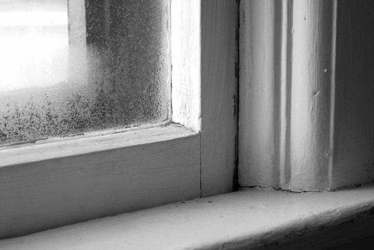 hongos de moho-humedad-interiores