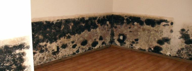hongos de moho-interiores
