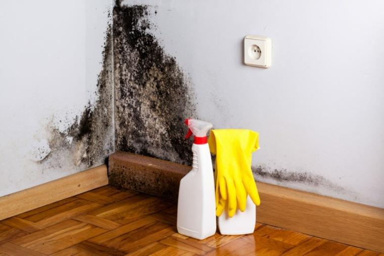 hongos por humedad-interiores