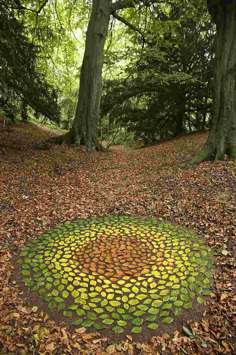imagenes de mandalas-hojas-colores