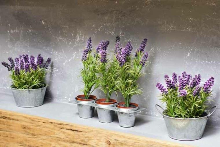 lavanda cultivo y subespecies aptas para diferentes tipos de climas. Black Bedroom Furniture Sets. Home Design Ideas