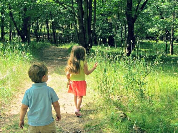 paseo-por-el-bosque