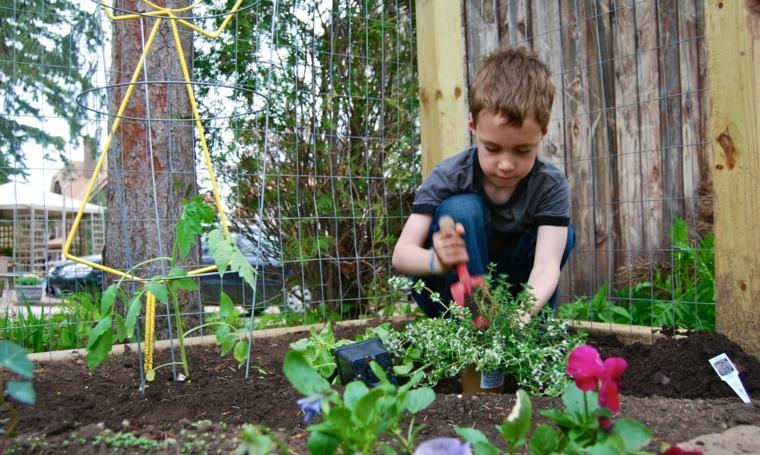 plantar-en-el-jardin