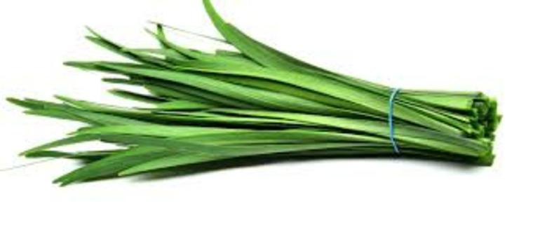 plantas alimenticias ajo