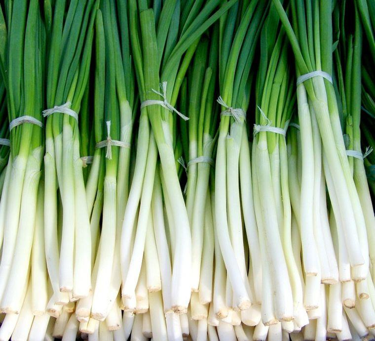 plantas alimenticias cebolla