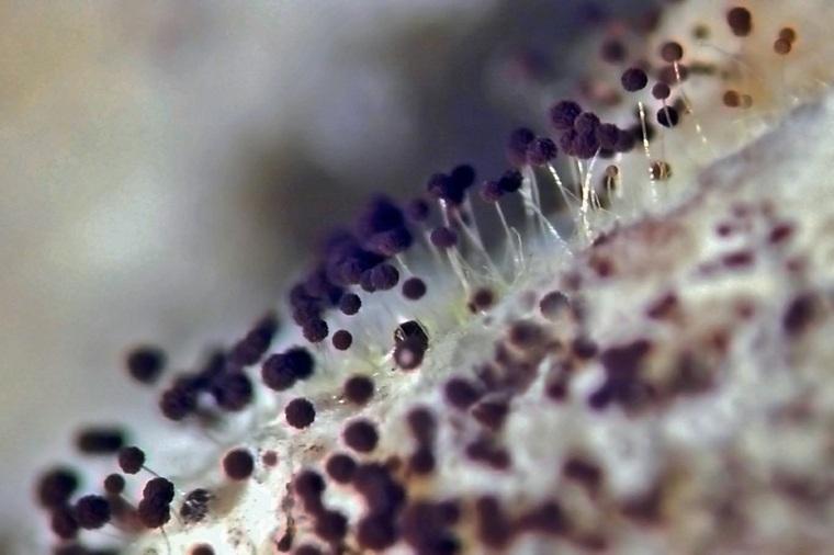 problemas de hongos-interiores