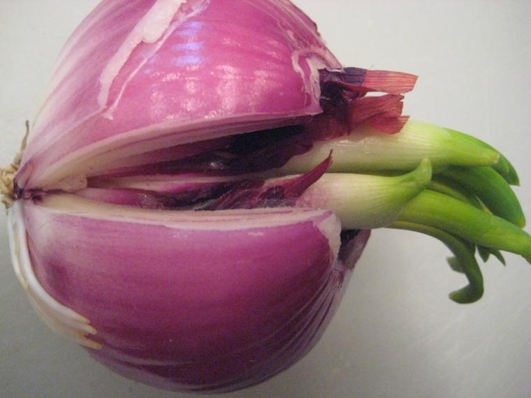 propiedades de la cebolla-tipos