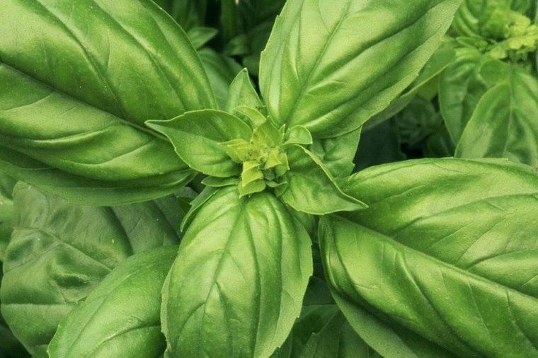 recetas-de-cocteles-hierbas-verano-albahaca