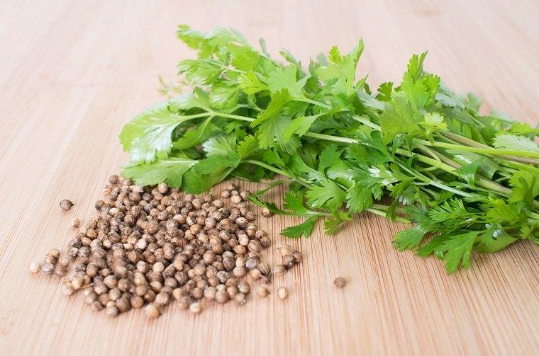 recetas-de-cocteles-hierbas-verano-cilantro-coriandro