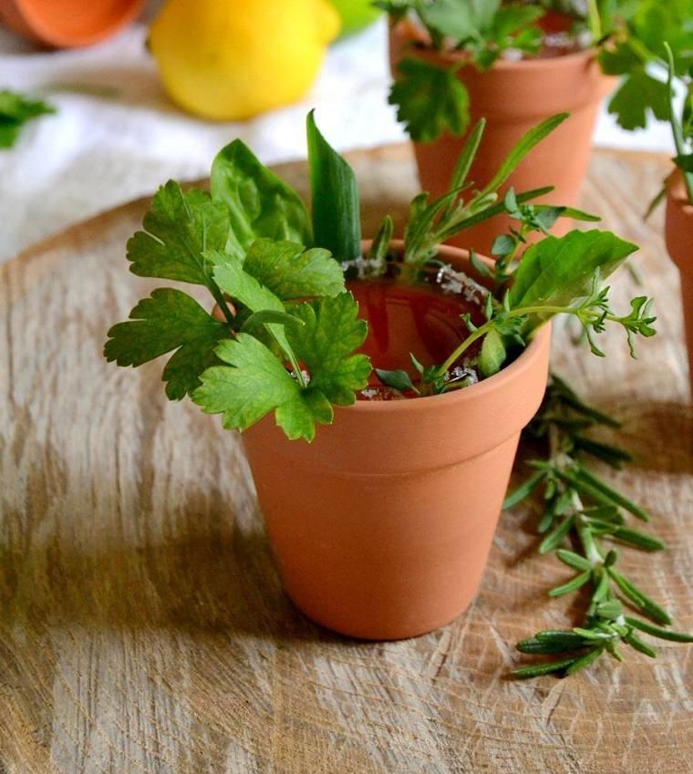 recetas de cocteles-hierbas-verano-hierbas