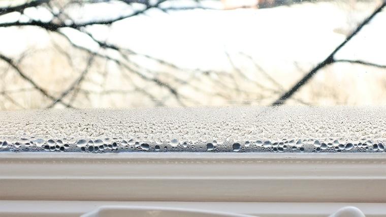 tipos de hongos de humedad-interiores-casas