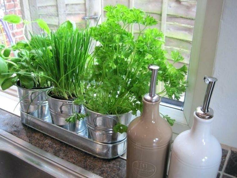cocina-tradicional-plantas-macetas