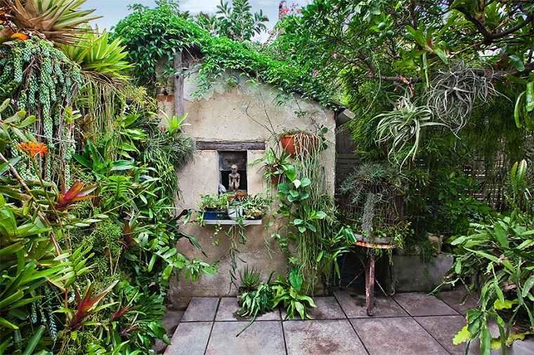 como tener un jardín flores-plantas-tropicales