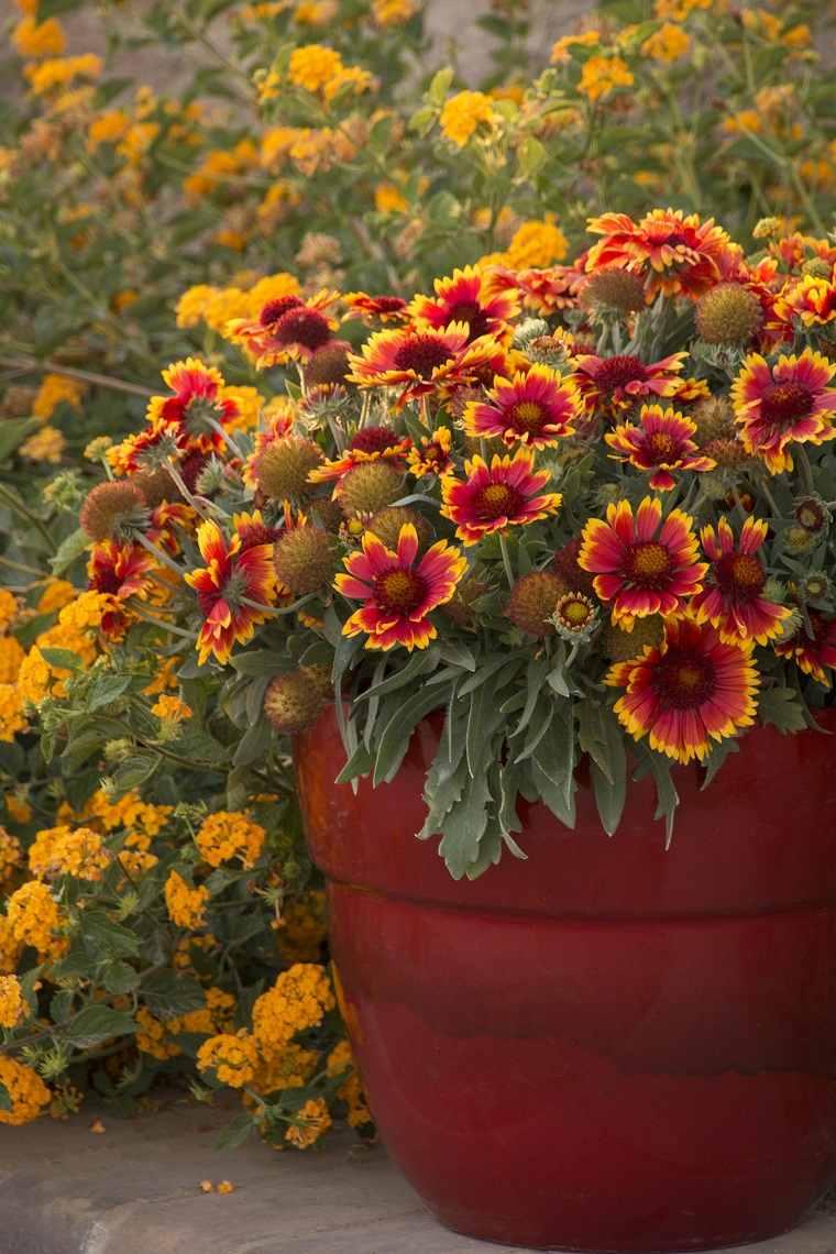 cultivo-flores-planta-Guiallardia