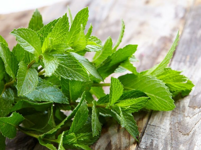 ideas-plantas-medicinales-caseras