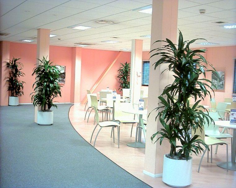jardineras de piso-plantas-grandes