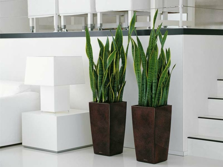 macetas modernas-elegantes-decorar-interior