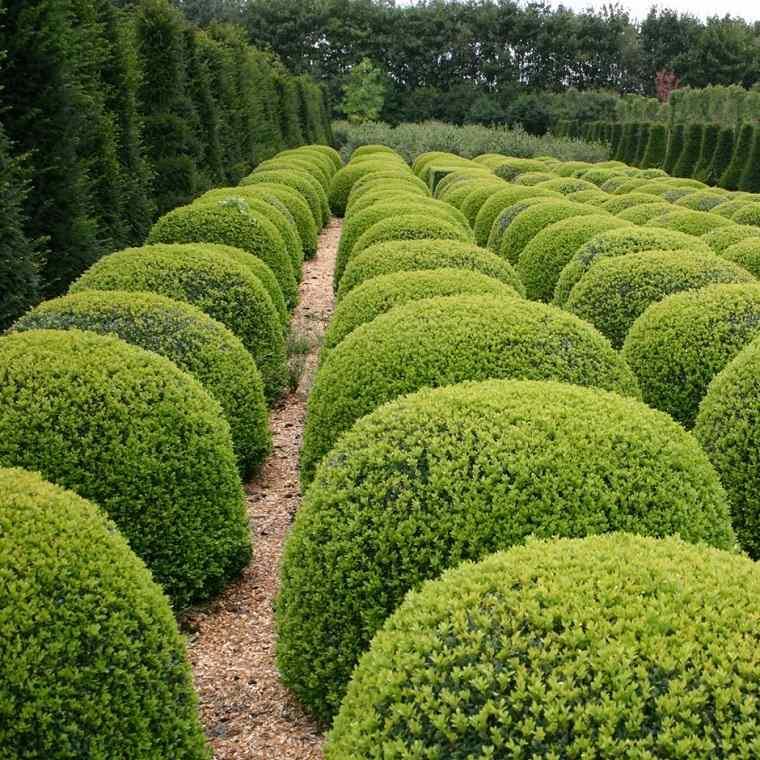 plantas-para-jardin-Buxus-ideas-consejos