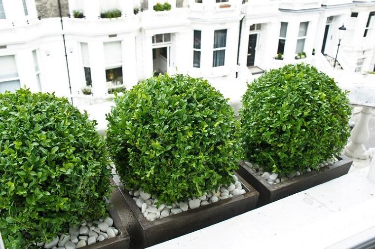 plantas-para-jardin-Buxus