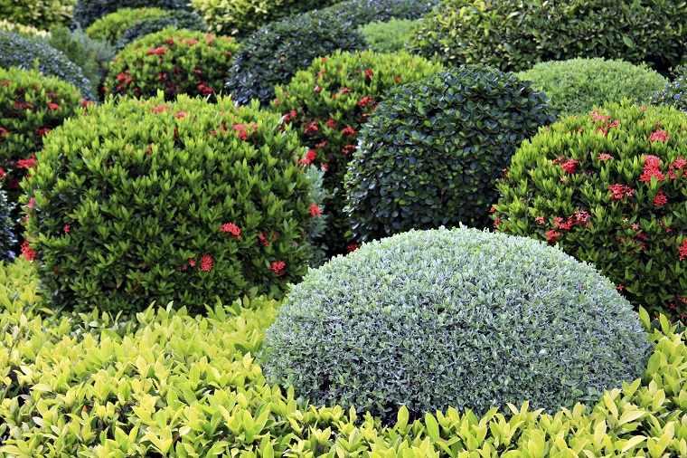 plantas para jard n 5 plantas perennes de flor para On arbustos perennes para jardin