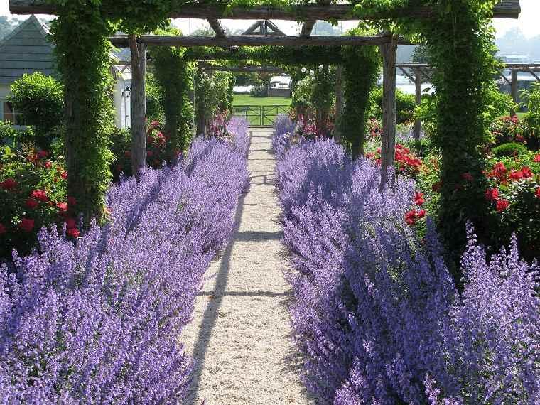 plantas-para-jardin-pergola-camino-lavanda
