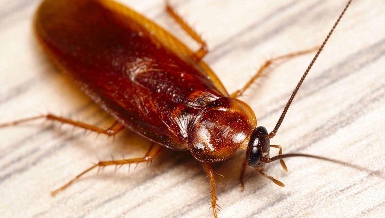 spray wd-40-trucos-cucarachas-insectos