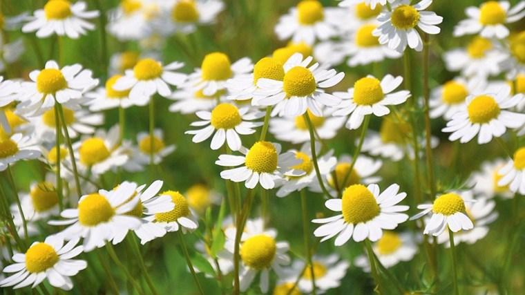 tipos de plantas medicinales especiales