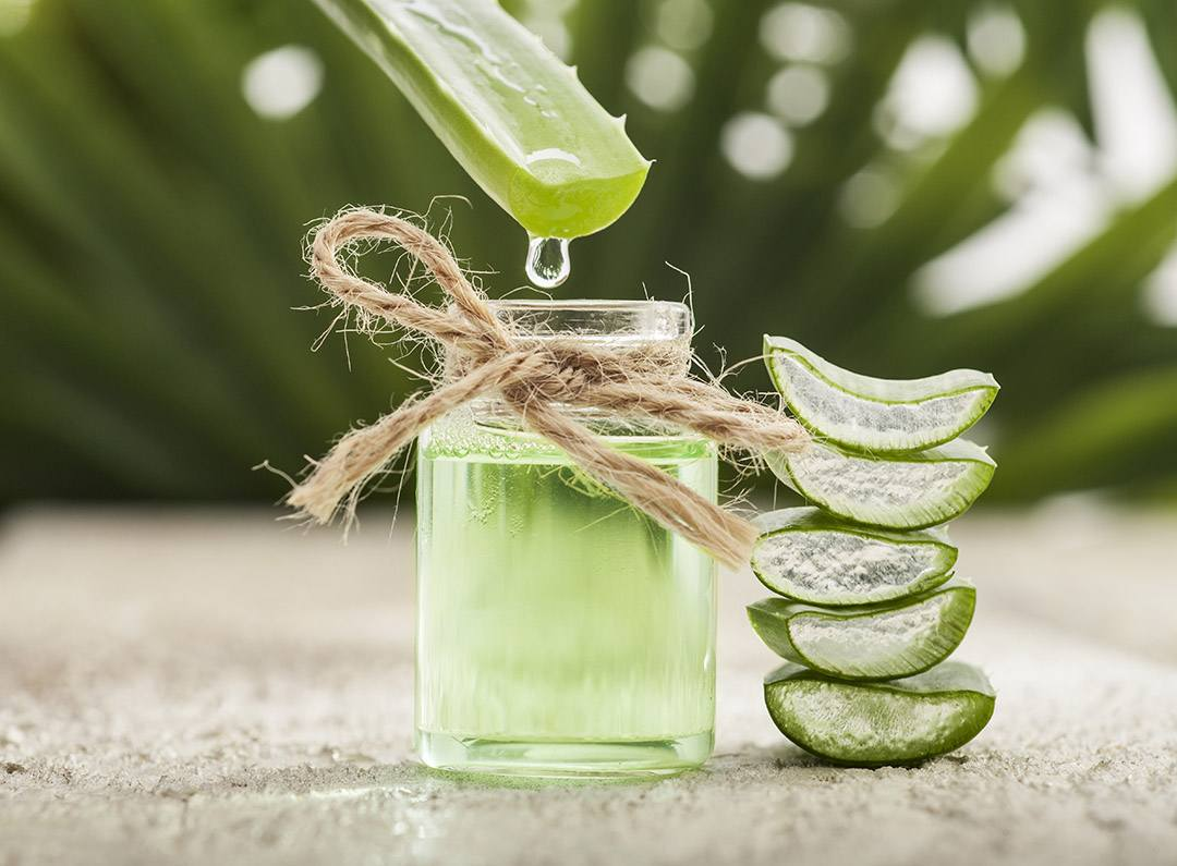 aloe vera beneficios-ideas-uso-refrescos