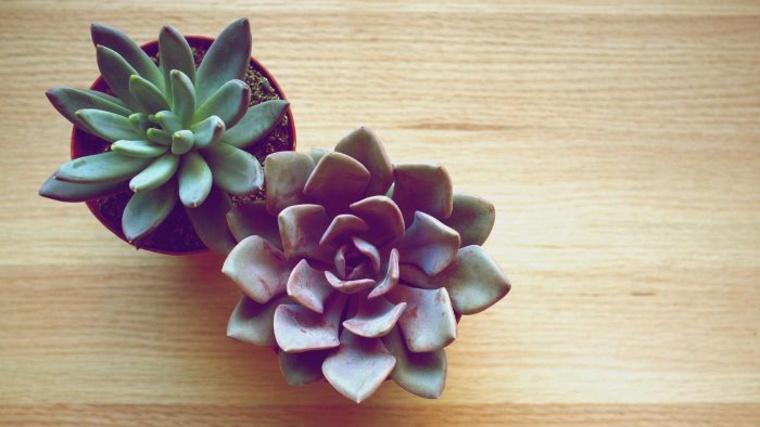 caracteristicas-de-las-plantas-suculentas-estilo-plantas