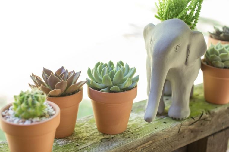 caracteristicas-de-las-plantas-suculentas-macetas-decoracion