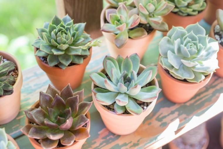 caracteristicas-de-las-plantas-suculentas-macetas-pequenas