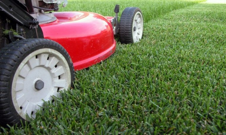 lawn tips-maintenance-cutting
