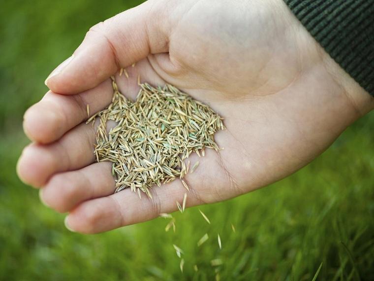 cultivo de cesped-semillas-cultivar-estilo