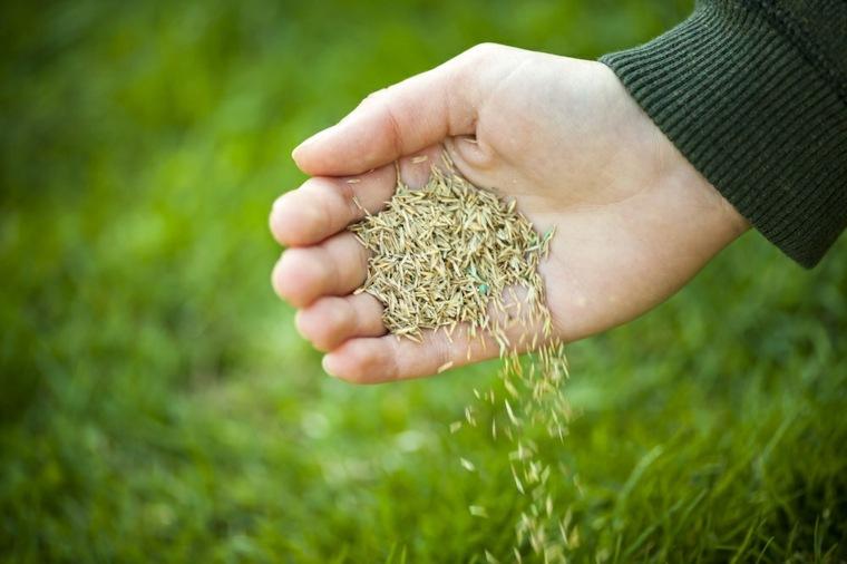 cesped siembra-consejos-mantenimiento