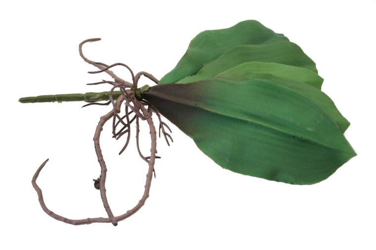 como cuidar una orquidea-raices-casa
