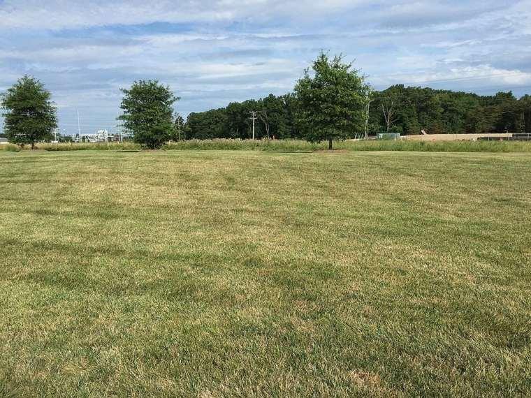 mower-look-straw-grass