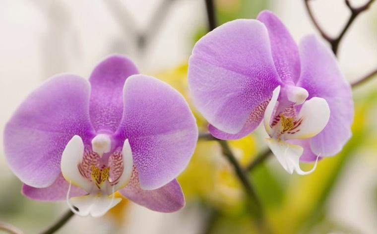 cuidado de orquideas-casa-revitalizarlas
