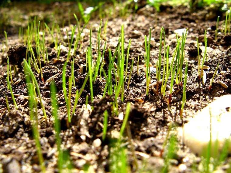cultivar-cesped-jardin-ideas-espcios-cesped-pequeno