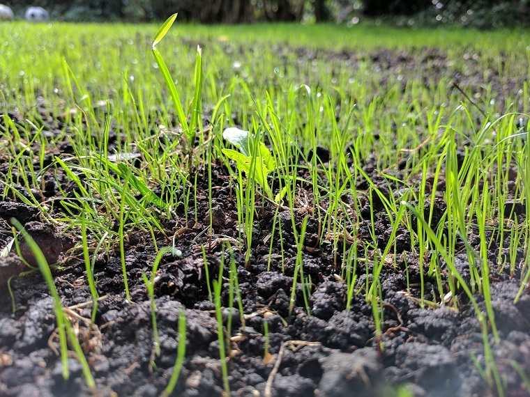 cultivar-cesped-jardin-ideas-espcios-nuevo