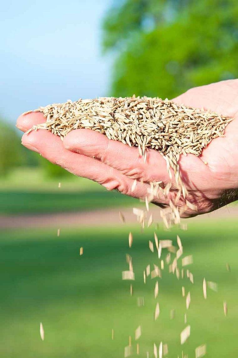 cultivar-cesped-jardin-ideas-semillas-mano