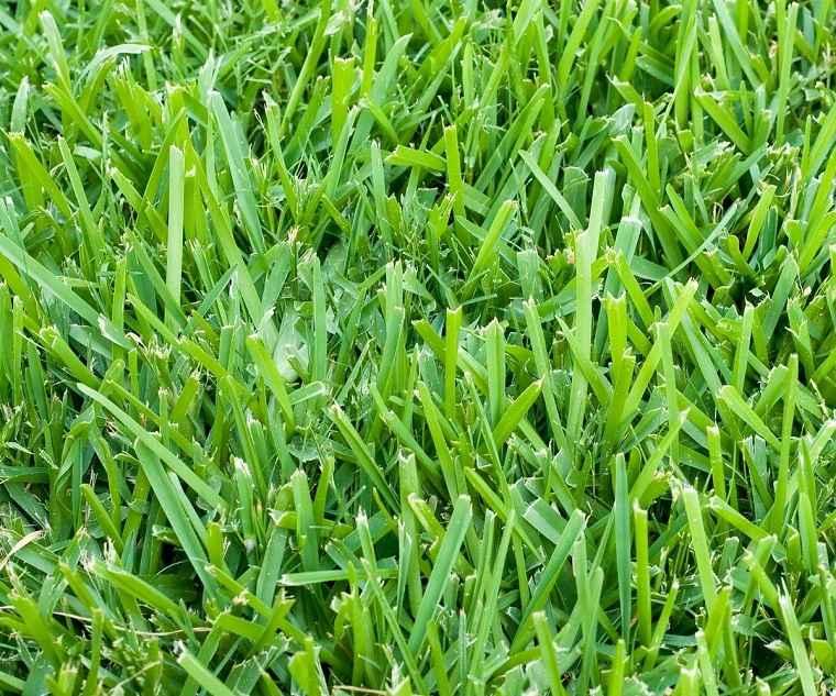 cultivar-cesped-ideas-jardin-verde-original