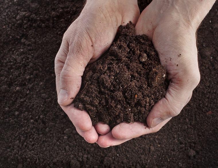 cultivo-cesped-prepara-suelo-consejos