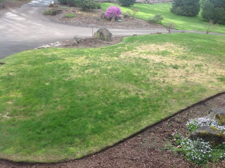 decoration of small gardens-problems-lawn