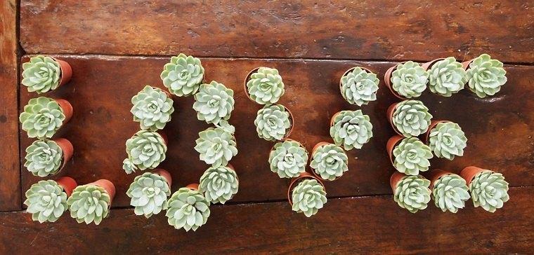decorar-plantas-suculentas-ideas