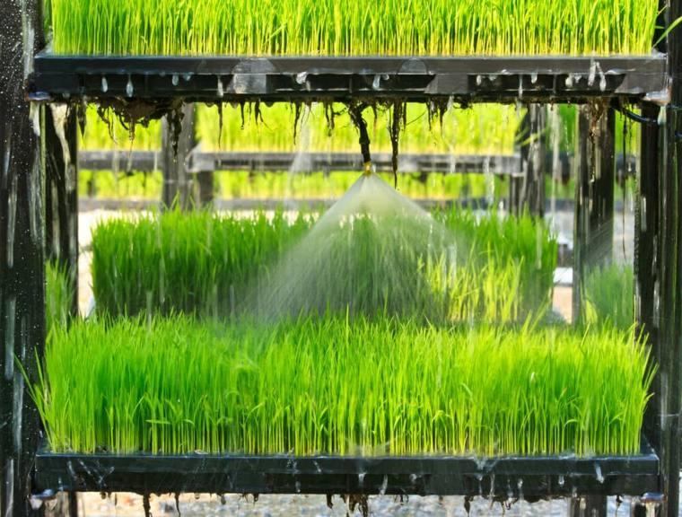 diferentes formas de cultivo-aeroponicas-plantas