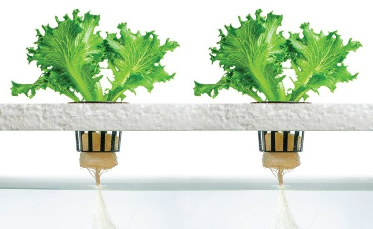 diferentes formas de cultivo-hidroponicas-plantas